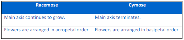 Morphology of Flowering Plants NCERT Solution